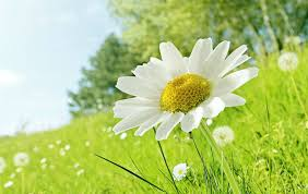 زهور طبيعية جميلة