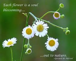 beauty break nature quotes flower quotes flowers