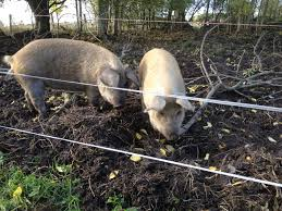 Three Line Electric Fence For Pigs