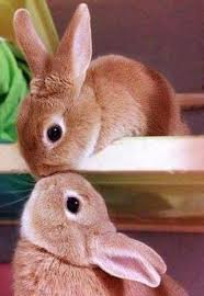 The 25 Cutest Animal Kisses | Cute animals kissing, Animals ...