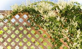 Top 10 Climbing Plants For Fences Trellis