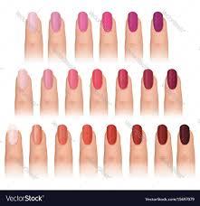 fashion colors nail care vector image