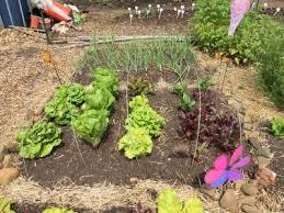grow it eat it university of maryland