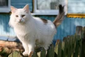 orange oil cat repellent recipe home