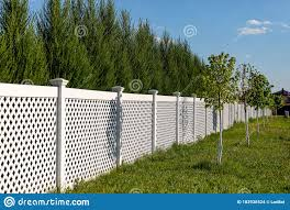 White Vinyl Fence In A Cottage Village Tall Thuja Bushes Behind The Fence Stock Photo Image Of Outdoor Property 182938524