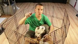 How To Build A Cheap Diy Temporary Dog Playpen With Parts You May Already Own Youtube