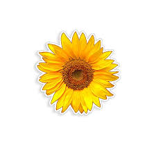 Golden Yellow Sunflower Sticker Cup Lapt Buy Online In Maldives At Desertcart