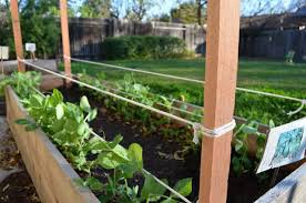 How To Build A Pea Bean Trellis During Your Child S Nap The Tasty Alternative Bean Trellis Pea Trellis Vegetable Trellis