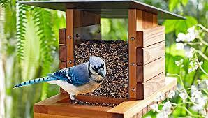How To Build A Diy Bird Feeder