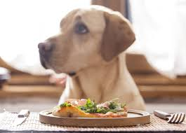 6 homemade dog food for sensitive stomach