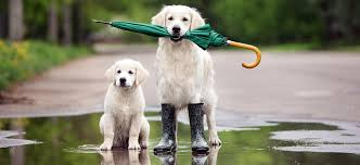 5 Spring Safety Tips Brought to You By Adorable Animals     Blogs ...