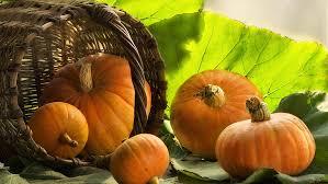 HD wallpaper: squash, pumpkin, vegetable, produce, halloween, autumn,  orange   Wallpaper Flare