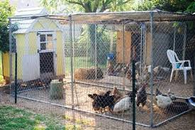 Fence Workshop Chain Link Fence Company My Pet Chicken Chain Link Fence Pet Chickens