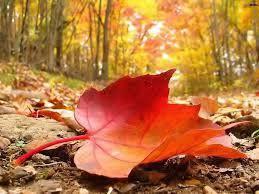 Image result for autumn rains photos