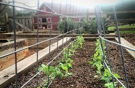 Joe Gardener Organic Gardening Like A Pro