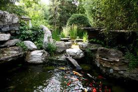 aquarium fish for outdoor fountains and
