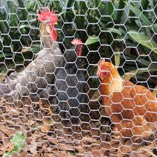 Small Hole Chicken Wire Mesh Philippines For Fence Lowes Buy Chicken Wire Mesh Philippines Small Hole Chicken Wire Mesh Chicken Wire Fence Lowes Product On Alibaba Com