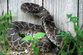 How To Snake Proof A Yard Fence Supply Online