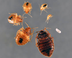 bed bugs using bed bug monitors