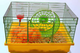 clean a hamster s cage