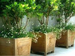tall outdoor potted plants tall outdoor