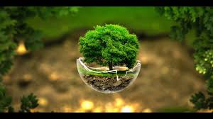 widescreen full hd picture green tree