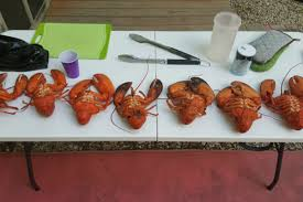Lobsters are Male and Which are Female ...