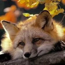 Twila Fox Facebook, Twitter & MySpace on PeekYou