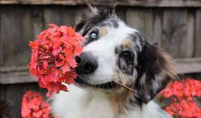 Your Dog's Springtime Checklist | Woof Report | The best email ...