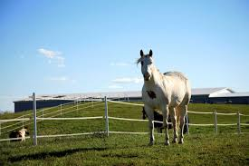 Does Electric Fencing Stress Horses The Horse