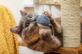 20 idées de jouets pour chat à faire