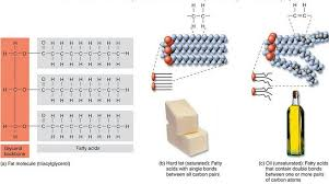 what is a lipid organic chemistry of