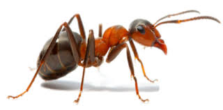 Download White Ant Company  Pictures