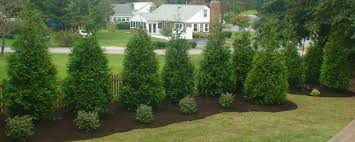 J W S Lawn And Landscape Privacy Trees In Maryland
