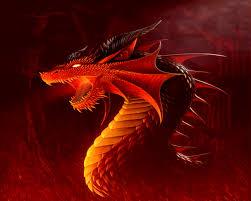 dragon wallpaper on hipwallpaper