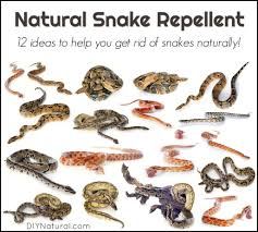 natural snake repellent 12 diffe