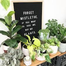 plants plant aesthetic