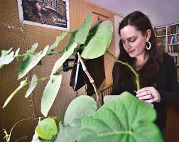 Empowerment through herbalism   The Manchester Journal   Manchester  Breaking News, Sports, Weather, Traffic