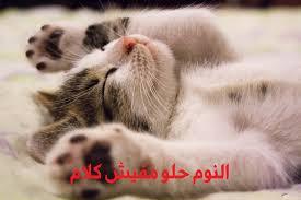 صور بسس روعة 10 قطط جميلة رقيقة ومميزة