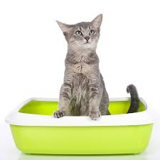 cat food recipes for sensitive stomach