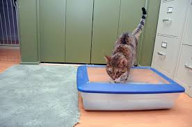 litter box happiness for cats of all
