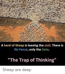 A Herd Of Sheep Is Leaving The Stall There Is No Fence Only The Gate The Trap Of Thinking Sheep Are Deep Trap Meme On Me Me