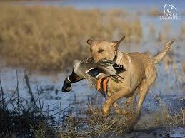 duck hunting hd wallpapers pixelstalk net