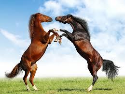 صور خيول جديدة وجميلة روعة صورة حصان عربي اصيل احصنة حلوة