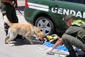 Seis detenidos por 115 kilos de marihuana en Bariloche – Viento ...