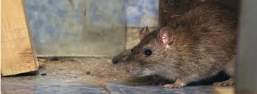 diy mouse trap and mouse repellent