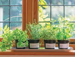grow your own pizza herb garden