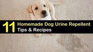 homemade dog urine repellent