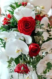 rose flower images dp لم يسبق له مثيل