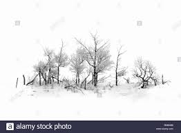 Beautiful Hoarfrost Covered Trees On A Rural Fence Line In Alberta Canada Stock Photo Alamy